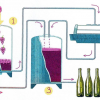 The main stages of the production of wine Beaujolais Nouveau
